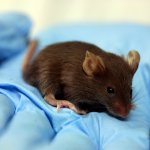 Lab_mouse_mg_3216